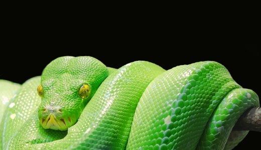 pythonでLINEにメッセージを送る